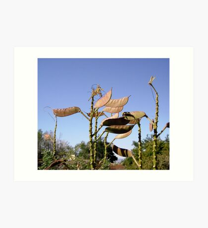 Seed Pods from Bird of Paradise bush Art Print