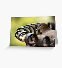 Nesting Mourning Dove Greeting Card