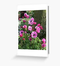So Pretty-in-Pink - Anemones in the Keukenhof Gardens Greeting Card