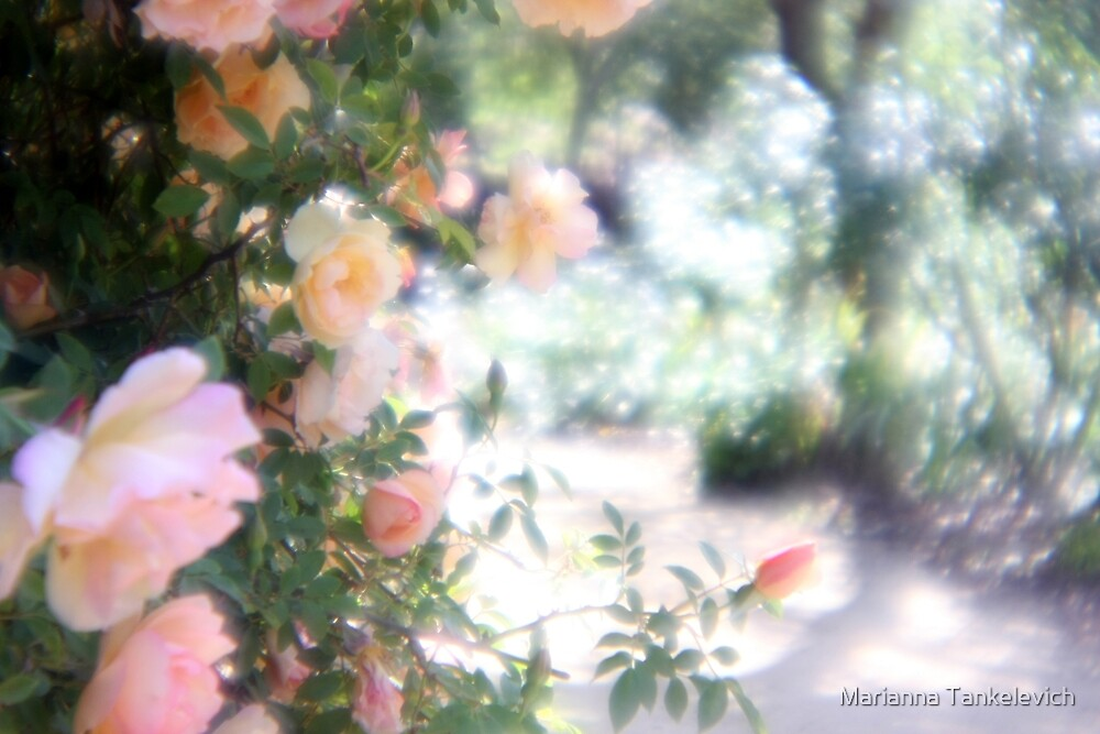 Enchanted Garden by Marianna Tankelevich