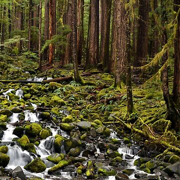 Olympic National Park Forest by LizzieMorrison