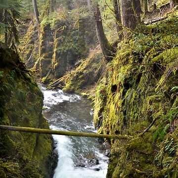 Olympic National Park Sol Duc River by LizzieMorrison