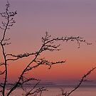 PNW Sunset by LizzieMorrison