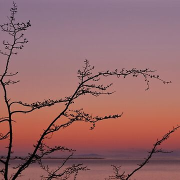 PNW Sunset by LizzieMorrison