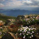 Alpine Summit by Karen Gunn