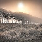 Exmoor Frost and Mist by SWEEPER