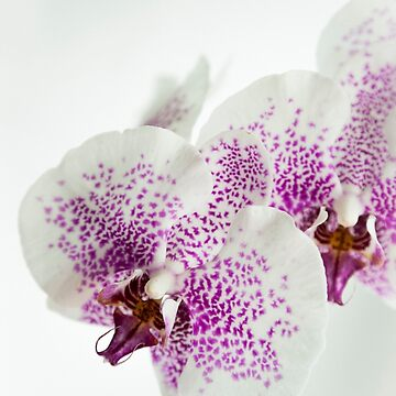 Purple orchid by p-insolito