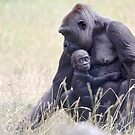 Mother and baby Gorilla by Sheila Smith