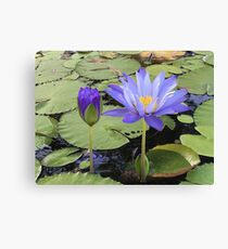 """Water Lillies"" Canvas Print"