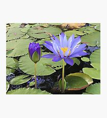 """""""Water Lillies"""" Photographic Print"""