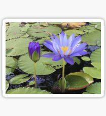 """""""Water Lillies"""" Sticker"""