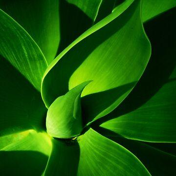 pita cactus green by p-insolito