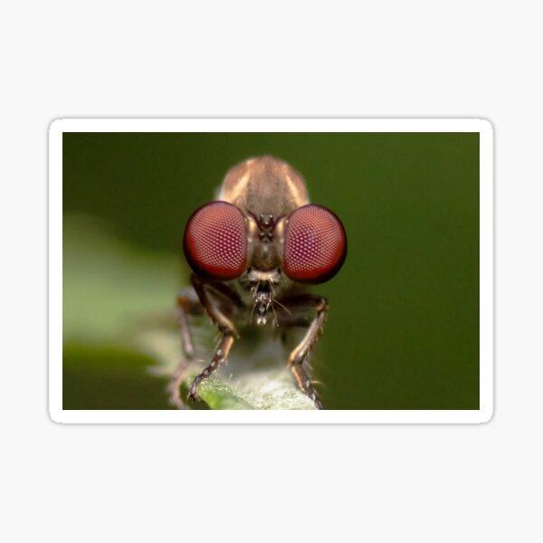 Big Eyes! Gnat Ogre Robber Fly Sticker