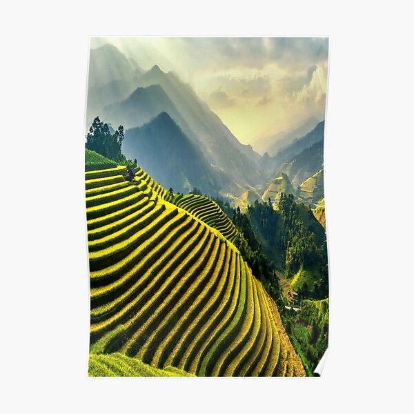 Vietnamese Farmland Poster
