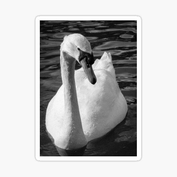 Monochrome Swan Sticker