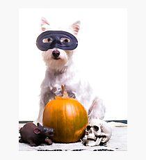 Happy Halloween Dog Photographic Print