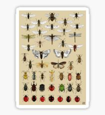 Entomology Insect studies collection  Sticker