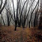 Langdon Woods Shroud by Wayne King