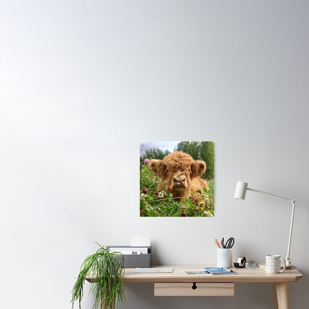 Baby Fluffy Cow Poster