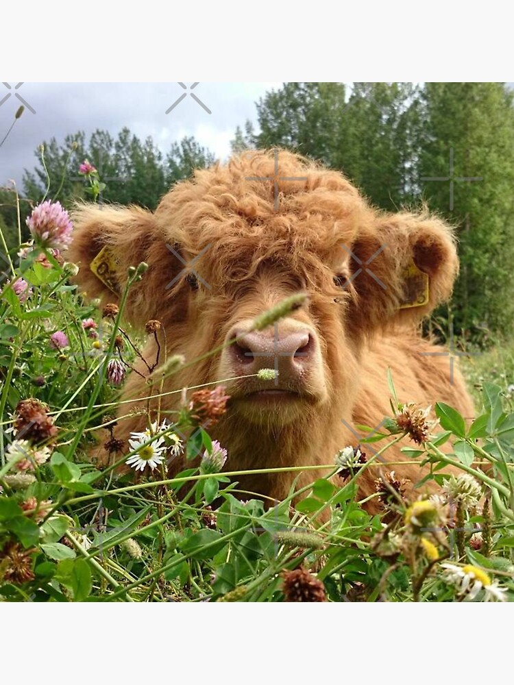 Baby Fluffy Cow by stuthiibhat4