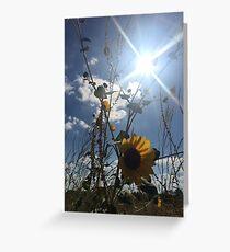 Texas Sun Flowers  Greeting Card