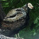 Rebob Ancestor Turkey Vulture by Theresa Comstock