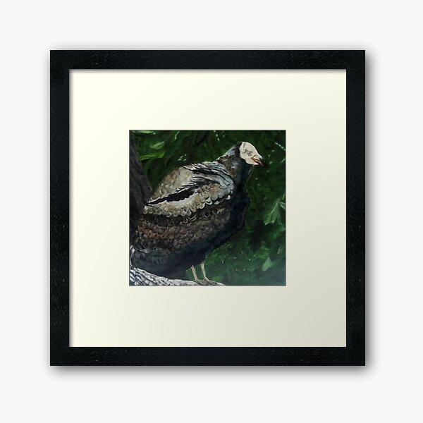 Rebob Ancestor Turkey Vulture Framed Art Print