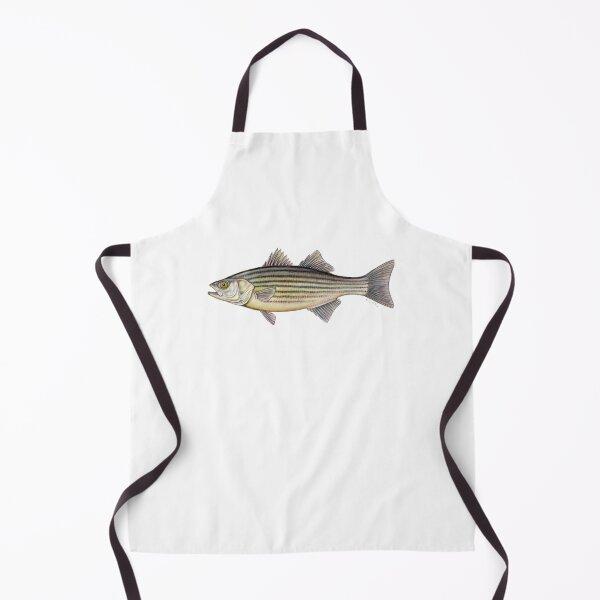 Striped Bass (Morone saxatilis) Apron