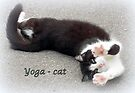 Yoga - Cat by ©The Creative  Minds