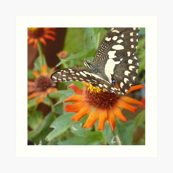 Mariposa en la flor Lámina artística