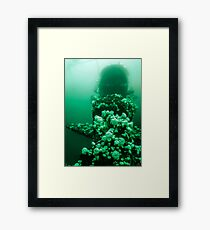 Anemones on the Wreck Framed Print