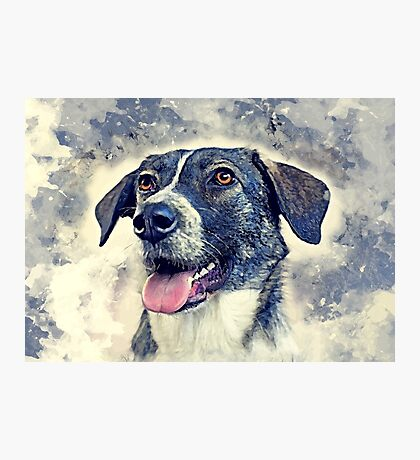 dog rex Photographic Print