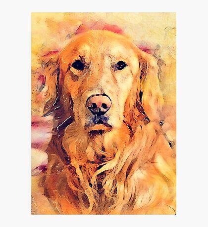 dog Lulu Photographic Print