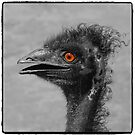 emu art by roger smith