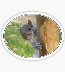 Peek-a-Boo! (Self Portrait in the Eye) Sticker