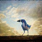 Jaybird by Lynn Starner