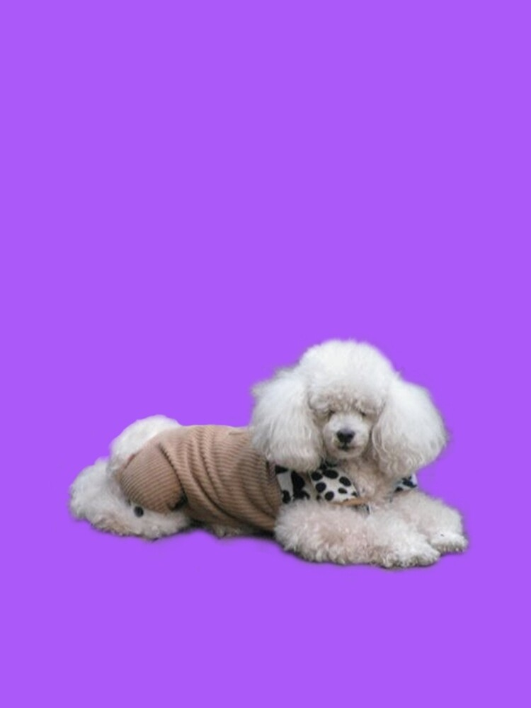 A Fashionable Poodle by DAdeSimone