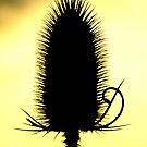 Teasle by ©The Creative  Minds