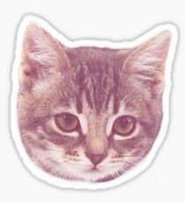 Cute Kitten  Sticker