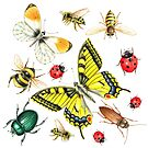 set of watercolor insects by Tanor