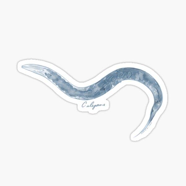 C. elegans (Model Organism Series) Sticker