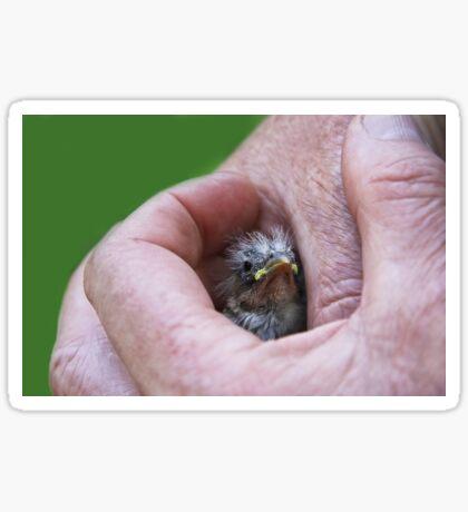 A Bird in the Hand..... Sticker