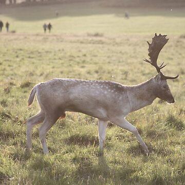 Autumn Buck by srclark