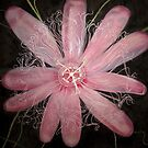 Passion Flower by Theresa Comstock