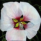 Rose of Sharon by Theresa Comstock