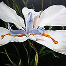 White Lily by Theresa Comstock