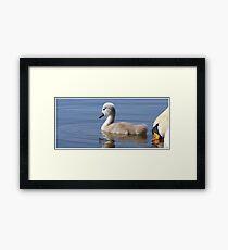 Swimming lesson Framed Print