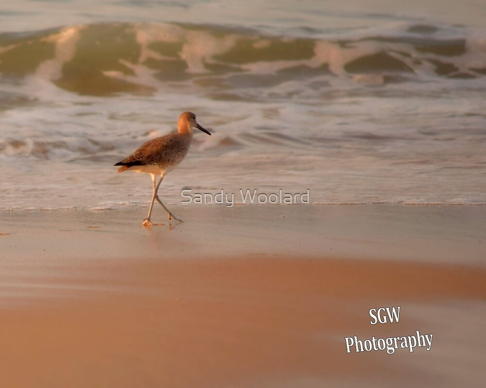 Sand in My Toes by Sandy Woolard