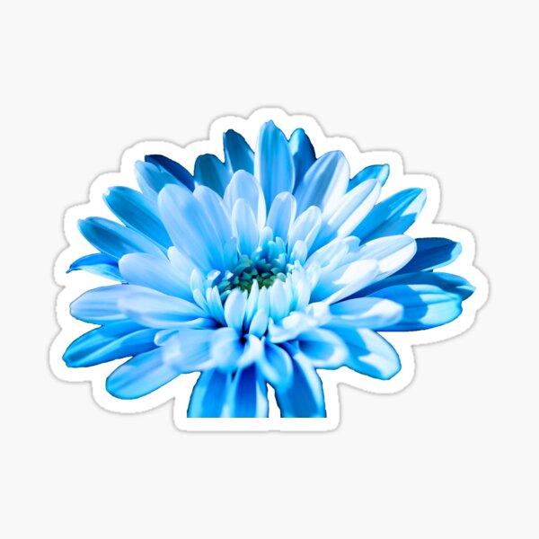 Blue Chrysanthemum Sticker