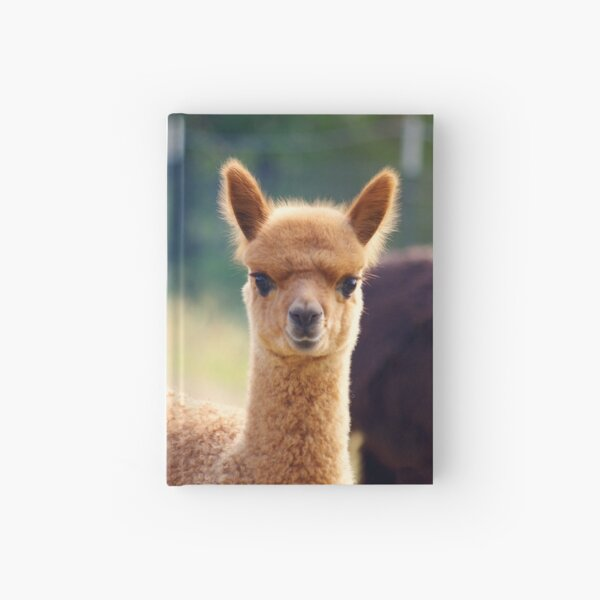 Cute Baby Alpaca Hardcover Journal